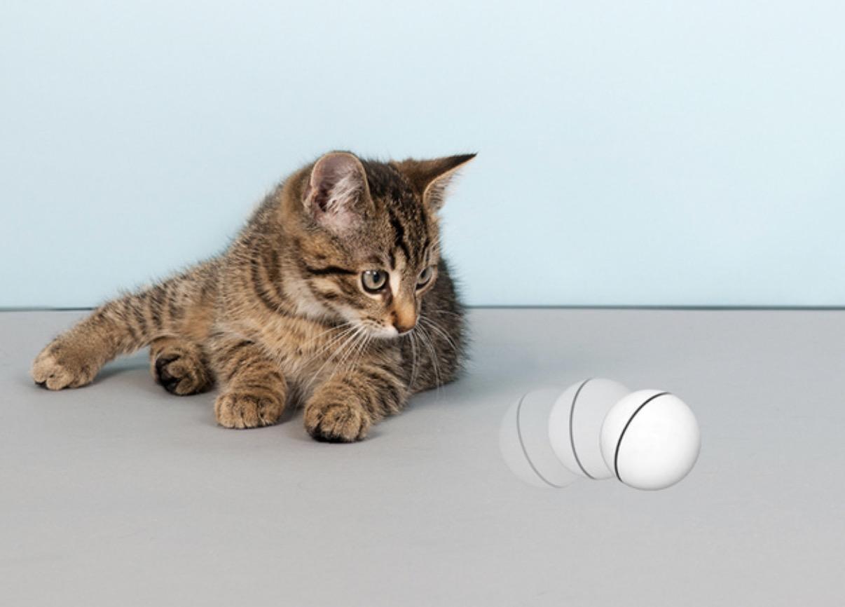 ペットの不安・運動不足の解消に!  フィットネスボール「ヘミルペット」