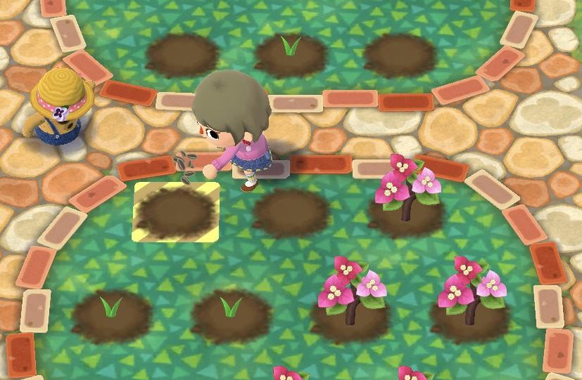 毎日やること1「 花を植えて収穫しよう」